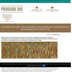 Graines de Noé, céréales anciennes et paysannes