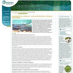 Sauvegarde de l'anguille > L'action territoriale