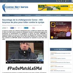 CORSENETINFOS 03/05/14 Sauvetage de la châtaigneraie Corse : 400 torymus de plus pour lutter contre le cynips