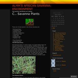 Almm's African Savanna: Environment