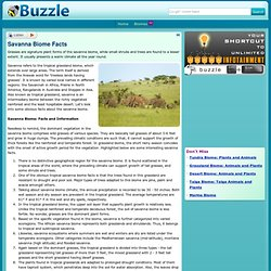 Savanna Biome Facts