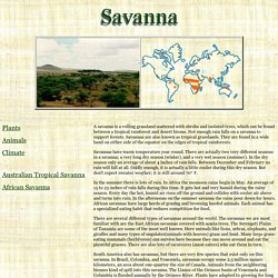 Savanna Biomes