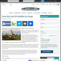 Save the Last 38 Giraffes in Congo