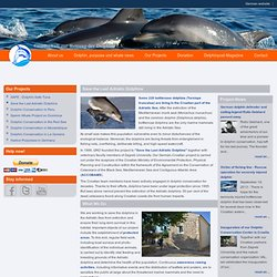 save Adriatic Dolphins