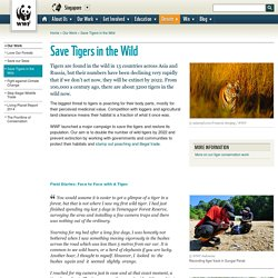 Save Tigers in the Wild