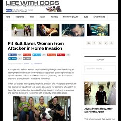 Pit Bull Saves Woman from Attacker in Home Invasion