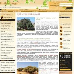 Tout savoir sur l'arganier, arbre aux usages multiples