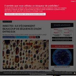 Scarabées et autres papillons pratiquent l'échange d'ADN depuis des millions d'années - Science-et-vie.com