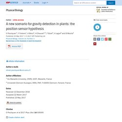 A new scenario for gravity detection in plants: the position sensor hypothesis