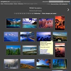 Wild Scenics Pictures