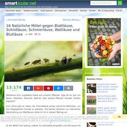 16 Natürliche Mittel gegen Blattläuse, Schildläuse, Schmierläuse, Wollläuse und Blutläuse