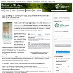 Building on building mosses, a return to Schistidium in the built environment – Botanics Stories