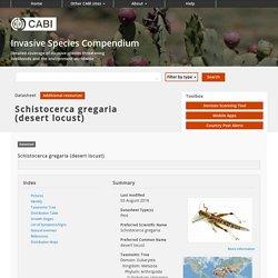 CABI 03/08/18 Schistocerca gregaria (desert locust)