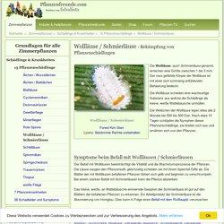 Wollläuse (Schmierlaus) bekämpfen - Pflanzenfreunde