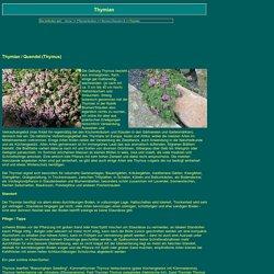 Thymian Pflege Schneiden Pflanzen Thymus Pulegioides Serpyllum Vulgaris