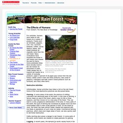 News: Rain Forest