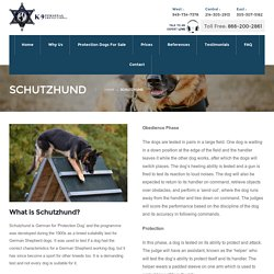Schutzhund - K9 Personal Protection Dogs
