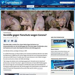 TAGESSCHAU_DE 05/01/21 TRAD AUTO : Des atteintes au bien-être des animaux à cause de Corona ?