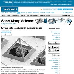 Living cells captured in pyramid cages