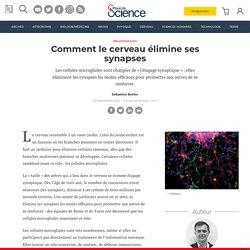 Comment le cerveau élimine ses synapses