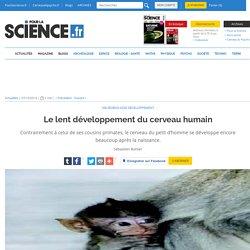 Le lent développement du cerveau humain
