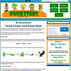 Science for Kids: Food Chain and Web