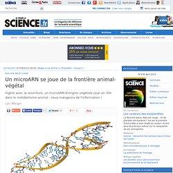 Un microARN se joue de la frontière animal-végétal