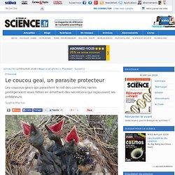 Le coucou geai, un parasite protecteur