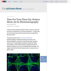 Time For Your Close-Up: Science Meets Art In Photomicrography : The Picture Show