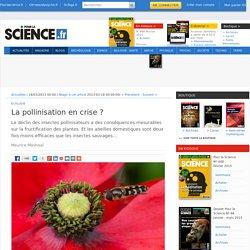 La pollinisation en crise ?