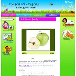 The Science of Spring: plant, grown, learn