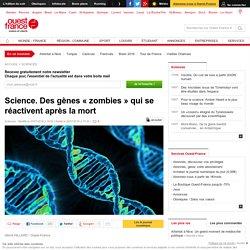 Science. Des gènes « zombies » qui se réactivent après la mort