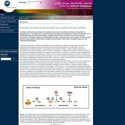 Greatwall, une protéine kinase essentielle pour contrôler la division cellulaire