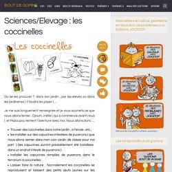 Sciences/Elevage : les coccinelles