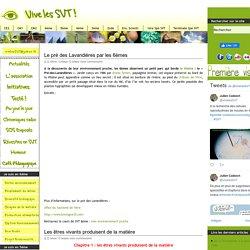 Vive les SVT !, les sciences de la vie et de la terre au collège et au lycée - Part 3