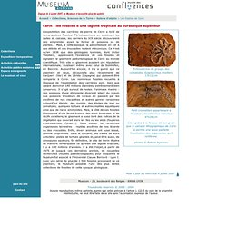 Sciences de la Terre, Les fossiles de Cerin