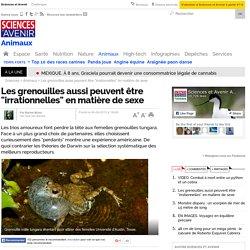 """Les grenouilles aussi peuvent être """"irrationnelles"""" en matière de sexe"""