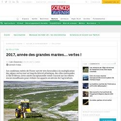 Les marées vertes de Bretagne vont être exceptionnelles en 2017 - Sciencesetavenir.fr