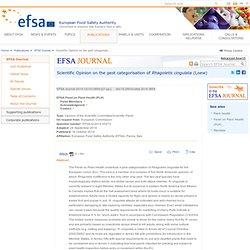 Scientific Opinion of the PLH Panel: Rhagoletis cingulata pest categorisation