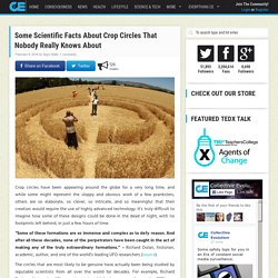 Some Scientific Facts About Crop Circles That Nobody Really Knows About