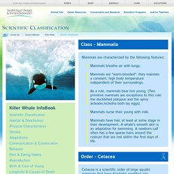 KILLER WHALES (Orcinus orca) - Scientific Classification
