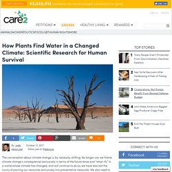 how-plants-find-water-in-a-changed-climate-scientific-research-for-human-survival