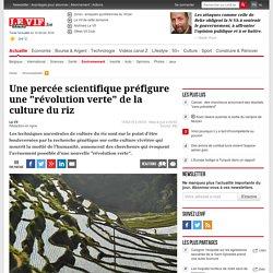 """Riz OGM pour une """"révolution verte"""" ?"""