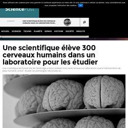 Une scientifique élève 300 cerveaux humains dans un laboratoire pour les étudier