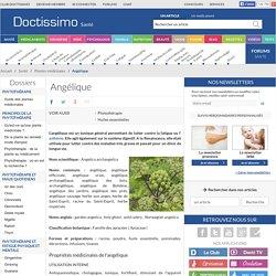 Angélique (Nom scientifique : Angelica archangelica ) : propriétés, bienfaits de cette plante en phytothérapie