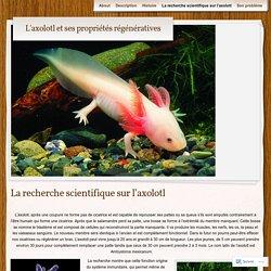 L'axolotl et ses propriétés régénératives