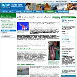 IRD - OCT 2011 - 385 - Le calmar géant : l'ogre qui envahit le Pacifique