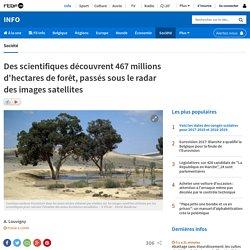 Des scientifiques découvrent 467 millions d'hectares de forêt, passés sous le radar des images satellites
