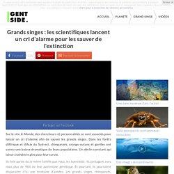 Grands singes : les scientifiques lancent un cri d'alarme pour les sauver de l'extinction