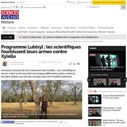 SCIENCES ET AVENIR 28/05/16 Programme Lubixyl : les scientifiques fourbissent leurs armes contre Xylella